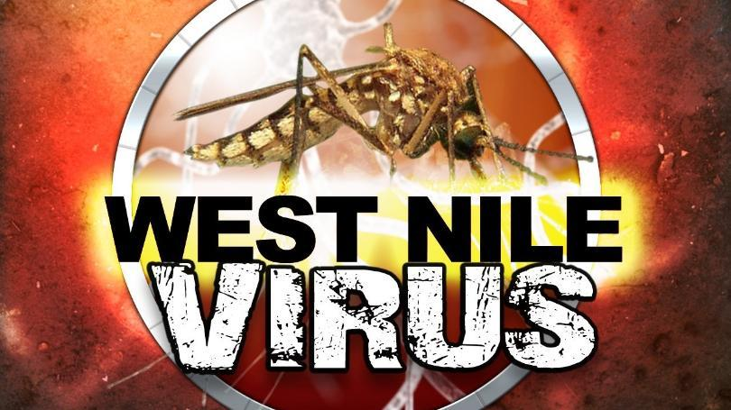 West nile virus mgn image